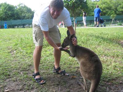 australien dyr kænguro
